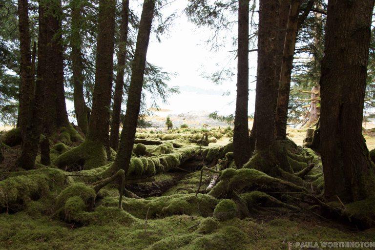 Haida Gwaii-5706